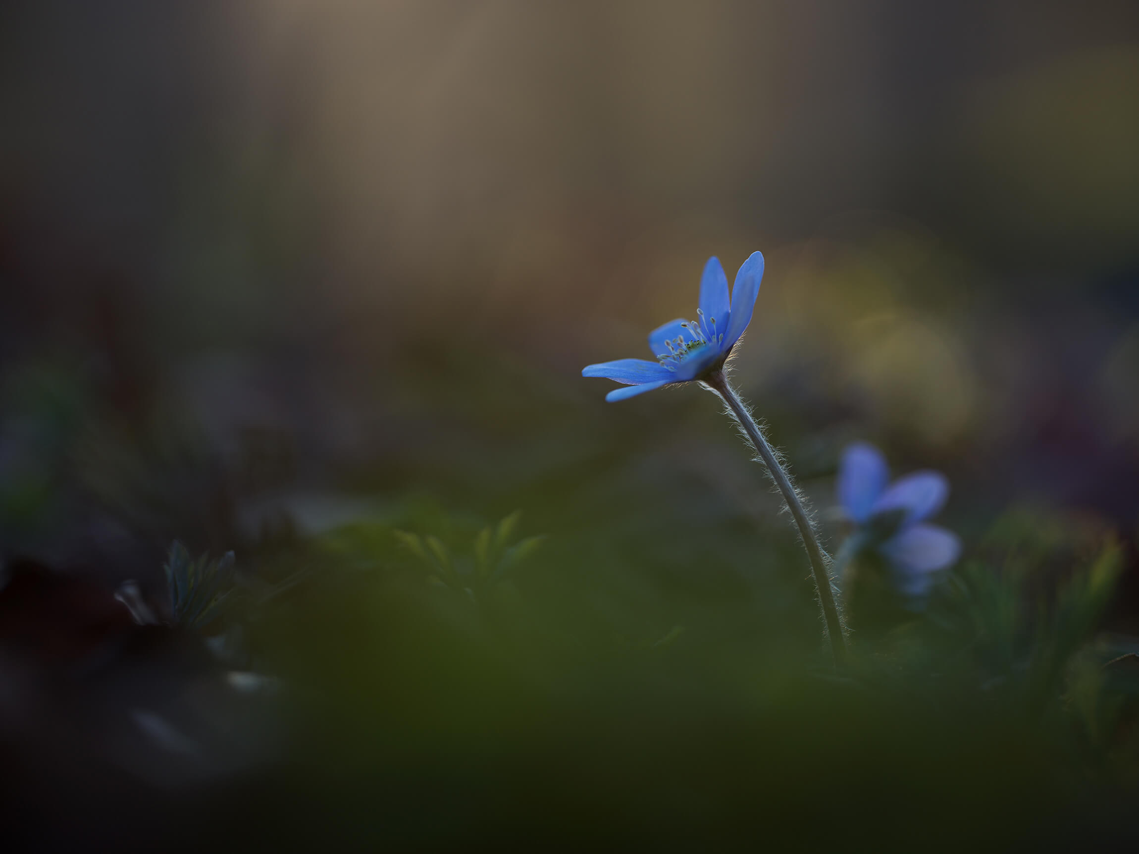 Linus Englund | Finding the Dramatic and the Delicate in Swedish Nature