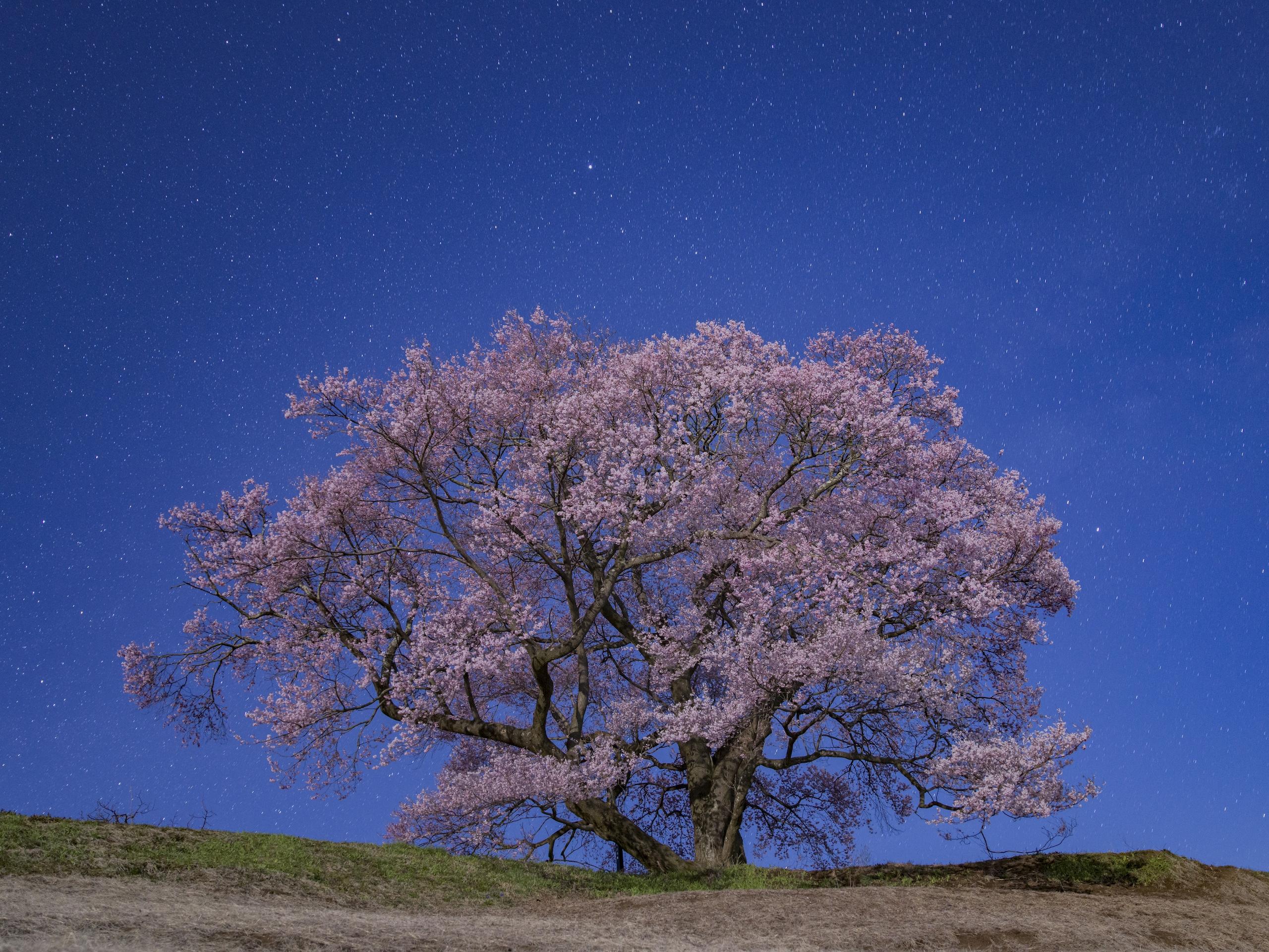 TERUYASU KITAYAMA  ハッセルブラッドの中判デジタルで広がる天体・星景写真の世界
